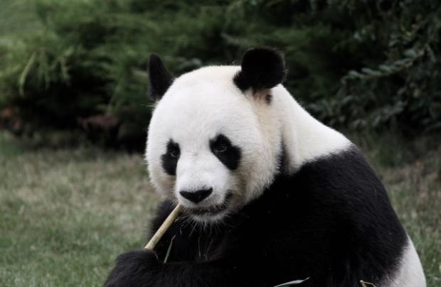 uutinen_uutisryhmä_panda