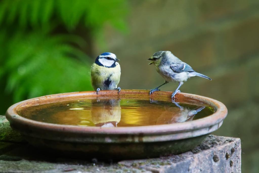 Lintuja vesilähteellä.